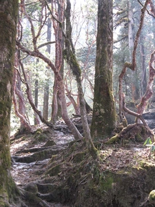 Forest Deurali
