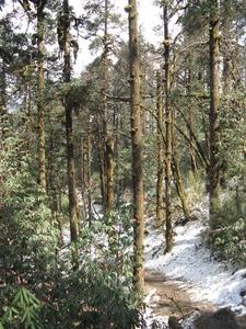 Pine Forest Deurali