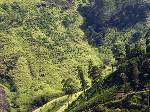 Short Tour in Sri Lanka Photos
