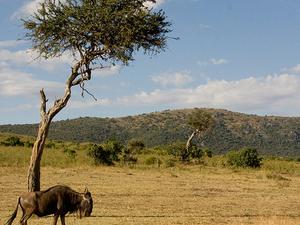 Tanzania Wild Photos