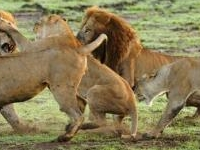Wildrace Africa Safaris