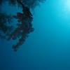 Dive the USAT Liberty - Shipwreck Dive