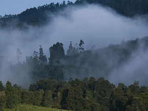 Kodaikanal Honeymoon Tours Photos