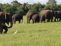 Srilanka Tour & Travels