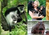 Proven Safaris