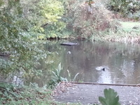 Burnt Ash Pond