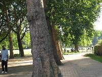 Deptford Park