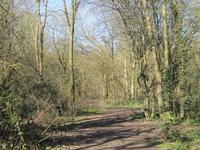 Crofton Wood