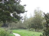 Ingrebourne Valley