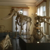Osteology Gallery In The Museo Civico Di Zoologia