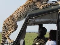 Karibuni Kenya Safaris Ltd