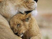 Dens Safari Tours & Transfers