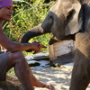 Mahout With Young Elephant