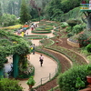 Government Botanical Garden, Ooty