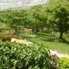 The Slope At The Walkthrough Aviary