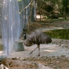 Emu In The Birds' Section