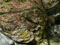 Thur Waterfalls