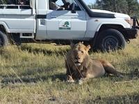 Letsatsi Safaris & Lodge