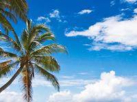 Island Explorer Holidays