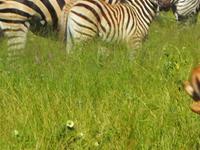 Extremely Wild Safaris