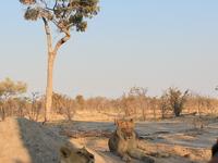 Embrace Safaris