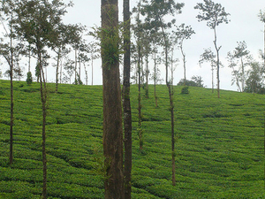 A to Z Trip Maker Daily Coorg Volvo Tour Photos