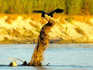 SUMMER in Dibru- Saikhowa National Park, Assam Photos