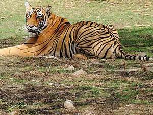 Ranthambhore Safari Tours Photos