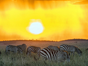 Best of Kenya and Rift Valley Safaris Photos
