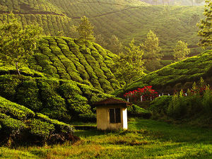 Amazing Kerala Package Photos