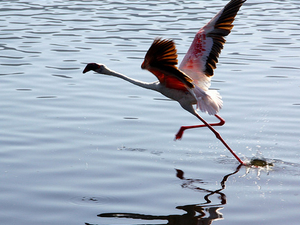 Nature and Birding Safari Photos