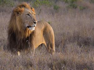 Kenya Tour Photos