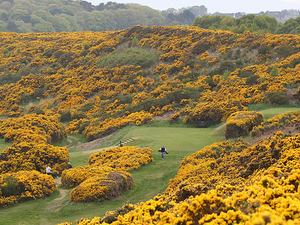 Claymore Golf Tour- Scotland Photos