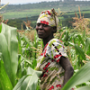 A Farmer In A Maize Field