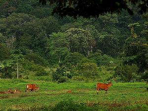 Alas Purwo National Park