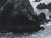 Alderney     Vogelfelsen
