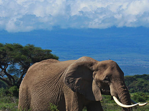 Amboseli Safari Package Photos
