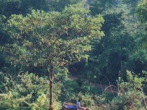 Amchang Wildlife Sanctuary