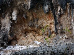 Ancient Sites of Kokas