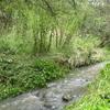 Andersons Creek