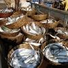 Anjarle Catch @ Harnai Fish Market MH Ratnagiri