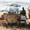 Anjuna Beach Goa Caw