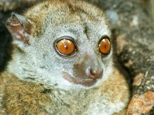 Classic North Tour of Madagascar Photos