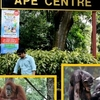 Ape Centre, Home To Humans Closest Species