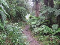 Apiti Hut to Saddle Mangaawai Hut Trail