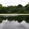 A Pond On Hampstead Heath
