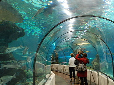 Aquarium Tunnel In Barcelona