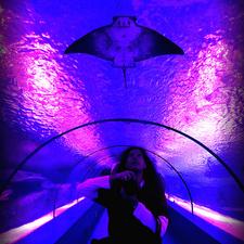 Aquarium&Dolphin Show Photos