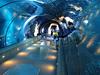 The Acrylic Tunnel - Oregon Coast Aquarium