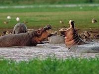 Arch Safaris & Tours